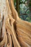 Raíz de un árbol, fondo de la naturaleza Imágenes de archivo libres de regalías