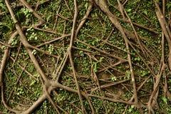 Raíz del árbol Foto de archivo libre de regalías