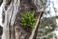 Raíz del árbol Fotografía de archivo libre de regalías