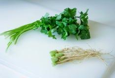 Raíz del coriandro con la verdura de hoja Imágenes de archivo libres de regalías