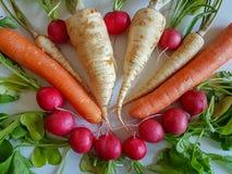 Raíz del perejil de la comida fresca con las hojas del verde y el rábano rojo aislados Fotografía de archivo