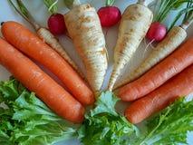 Raíz del perejil de la comida fresca con las hojas del verde y el rábano rojo aislados Fotografía de archivo libre de regalías