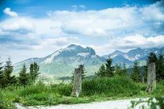 Raíz del pino del paisaje de la montaña Fotografía de archivo libre de regalías