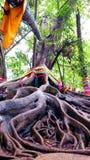 Raíz grande del árbol Fotografía de archivo