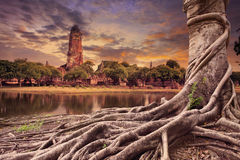Raíz grande del scape de la tierra del baniano de la pagoda antigua y vieja adentro Foto de archivo