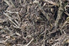 raíz invertida de un árbol con muchas ramas quebradas, palillos, hierba vieja y follaje, backgroun abstracto dramático Foto de archivo