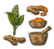 Raíz, polvo y flor de cúrcuma con la maja y el mortero stock de ilustración