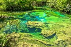 Raíz y agua en piscina esmeralda Imagen de archivo libre de regalías