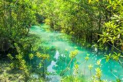 Raíz y agua en piscina esmeralda Foto de archivo