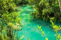 Raíz y agua en piscina esmeralda Foto de archivo libre de regalías