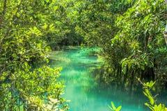 Raíz y agua en piscina esmeralda Imágenes de archivo libres de regalías