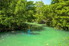 Raíz y agua en piscina esmeralda Fotos de archivo