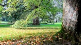 Raíz y parque del árbol de corteza de árbol fotos de archivo