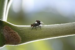 Rażący skrzyżowanie komarnicy na drzewie Obraz Royalty Free