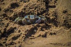 Raźny ducha krab na piaskach obraz stock