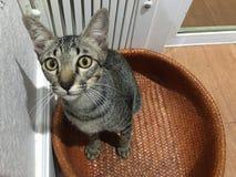 Raźny kot przestraszony kamera Fotografia Stock