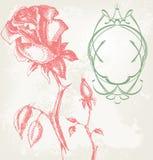 róża rocznik Obrazy Royalty Free