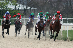 Raça de cavalo. Foto de Stock