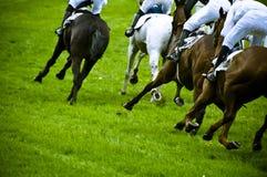 Raça de cavalo Foto de Stock Royalty Free