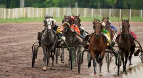 Raça de cavalo Imagens de Stock