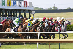 Raça de cavalo. Fotos de Stock Royalty Free