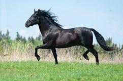 Raaf $c-andalusisch paard royalty-vrije stock foto