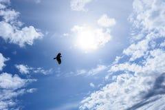 Raaf of kraai in de blauwe hemel Royalty-vrije Stock Afbeelding