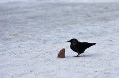 Raaf met stuk van brood op sneeuw stock afbeeldingen