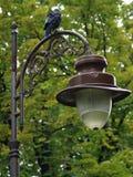 Raaf op een lantaarnpaal in het park Royalty-vrije Stock Foto