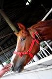 Raak het paard Stock Foto's