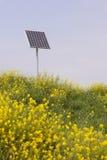 Raapzaad en zonnepaneel stock afbeelding