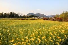 Raapzaadbloemen en anhui traditioneel dorp Royalty-vrije Stock Fotografie