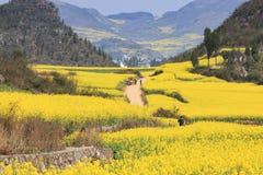 Raapzaadbloemen van Luoping in Yunnan China Royalty-vrije Stock Afbeelding