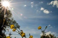 Raapzaadbloesems op de lenteweide stock fotografie