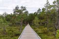 Raba Viru трясины Viru в национальном парке Lahemaa в Эстонии стоковое фото