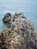 Rabac, adriatische Küste, 1 Stockbild