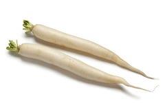 Rabanete branco longo Foto de Stock