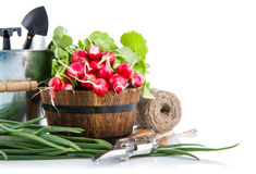 Rabanete fresco e cebola verde com ferramentas de jardim Imagens de Stock