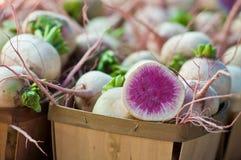 Rabanete orgânico escolhido fresco da melancia fotos de stock