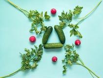 rabanete, pepinos, grupo da salsa, no fundo verde, verdes, f Foto de Stock