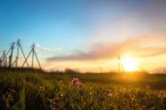 Rabanete selvagem de florescência contra o fundo do por do sol Foto de Stock