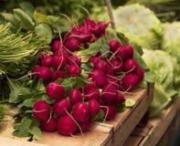 Rabanete vermelho Imagem de Stock Royalty Free