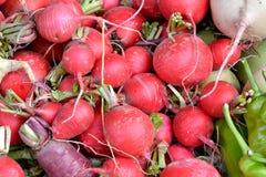 Rabanete vermelho Imagens de Stock