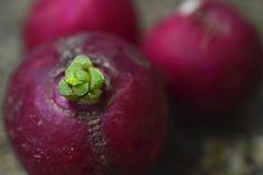 Rabanete vermelho fresco e natural fotos de stock royalty free