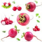Rabanete vermelho grande e pequeno Imagens de Stock Royalty Free
