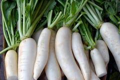 Rabanetes brancos de Daikon Fotografia de Stock Royalty Free