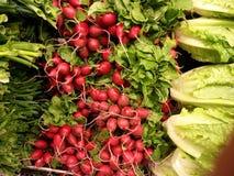 Rabanetes e verdes da alface Imagens de Stock