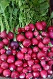 Rabanetes vermelhos de Freash Imagem de Stock Royalty Free