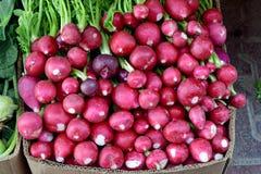 Rabanetes vermelhos de Freash Imagens de Stock