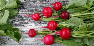 Rabanetes vermelhos frescos com as folhas verdes na superfície de madeira branca Imagem de Stock